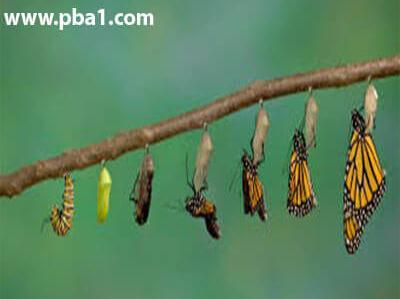 "Change 03 e1578587607532 - تغییر - <p style=""text-align: justify;"">در آموزش تغییر به مباحث تغییر یعنی چی؟ چطور میتونیم تغییر کنیم و به موفقیت برسیم؟ و زندگی عالی داشته باشیم، فواید و نتایج تغییر</p>"