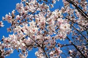 بهار انسان جدید