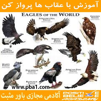 در آموزش با عقاب ها پرواز کن به مباحثی همچون:چرا باید با عقاب ها پرواز کرد؟، چقدر در زندگی دوست دارین عقاب باشین؟، رازتأثیرپذیری شما در زندگی، کمال همنشینی چگونه در شما اثر می کند؟، چگونه افراد مناسب زندگیمونو انتخاب کنیم؟،