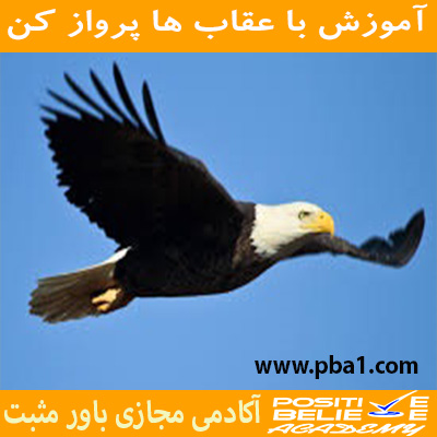Eagle flight 08 - با عقاب ها پرواز کن - در آموزش با عقاب ها پرواز کن به مباحثی همچون:چرا باید با عقاب ها پرواز کرد؟; چقدر در زندگی دوست دارین عقاب باشین؟; رازتأثیرپذیری شما در زندگی; کمال همنشینی چگونه در شما اثر می کند؟; چگونه افراد مناسب زندگیمونو انتخاب کنیم؟; همواره باحرفهایها ارتباط داشته باشید; الگوبرداری از افراد موفق در فضای مجازی; باهم بررسی کردیم.