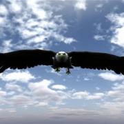 در آموزش با عقاب ها پرواز کن به مباحثی همچون:چرا باید با عقاب ها پرواز کرد؟، چقدر در زندگی دوست دارین عقاب باشین؟، رازتأثیرپذیری شما در زندگی، کمال همنشینی چگونه در شما اثر می کند؟، چگونه افراد مناسب زندگیمونو انتخاب کنیم؟، همواره باحرفهایها ارتباط داشته باشید، الگوبرداری از افراد موفق در فضای مجازی، باهم بررسی.Eagle flight
