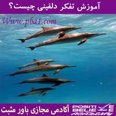 dolphin thinking 02 - تفکر دلفینی چیست؟