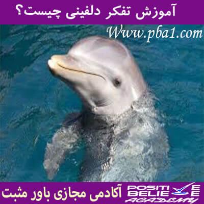 dolphin thinking 03 - تفکر دلفینی چیست؟