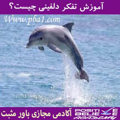 dolphin thinking 04 - تفکر دلفینی چیست؟