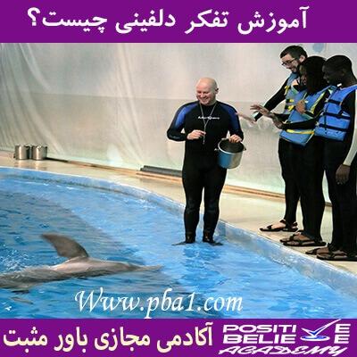 dolphin thinking 07 - تفکر دلفینی چیست؟