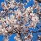 بهار زندگی با آکادمی مجازی باور مثبت